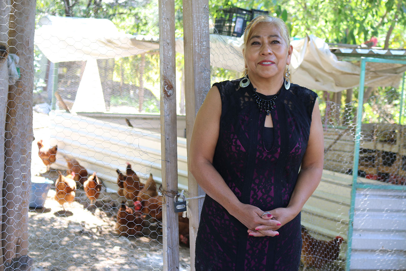 Media Asset Woman with Chickens